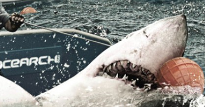 Verdens vildeste hajekspedition på history