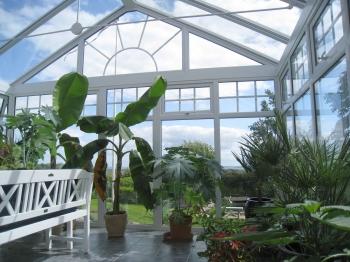 Planter i drivhus hvornår